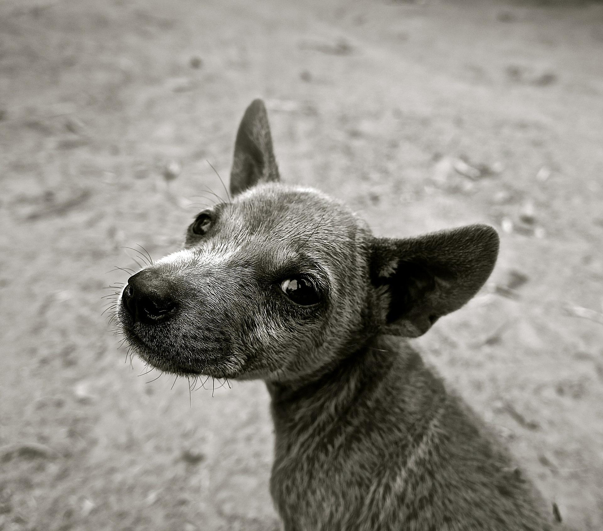 dog-589002_1920.jpg