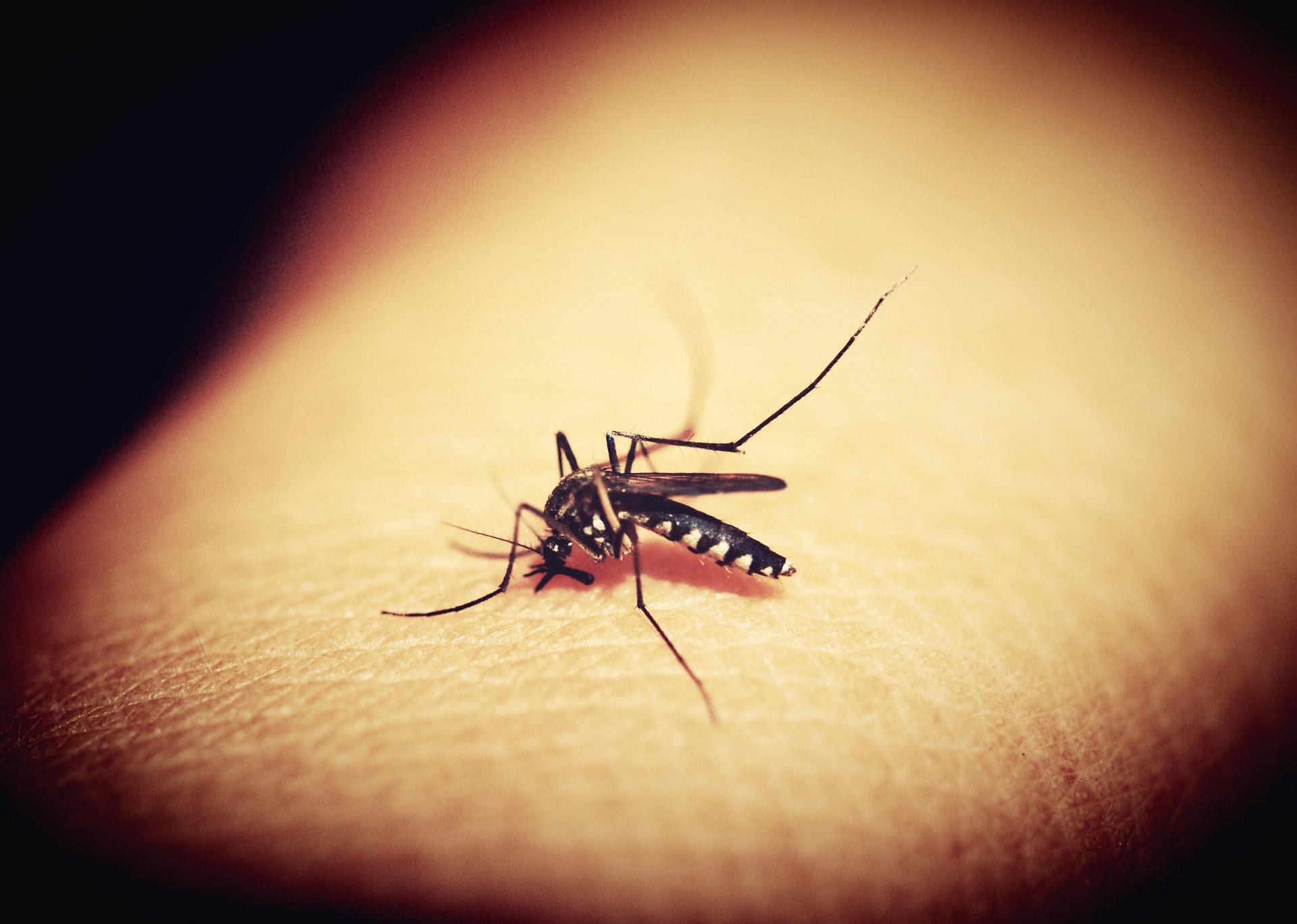 mosquitoe-1548975_1920.jpg