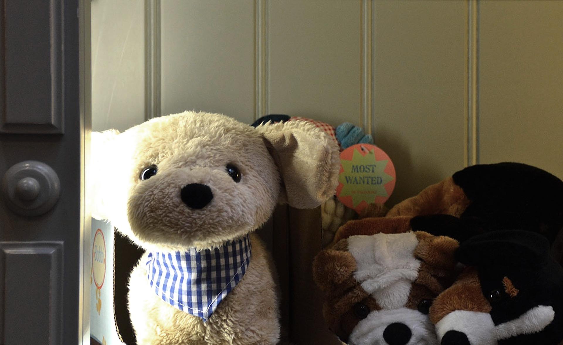 teddy-1778904_1920.jpg